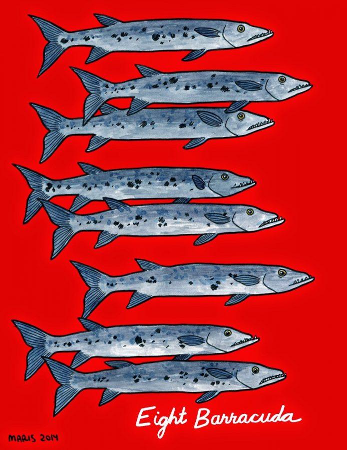 illustration of eight barracuda