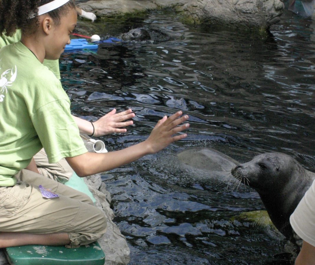 campers interacts with a seal