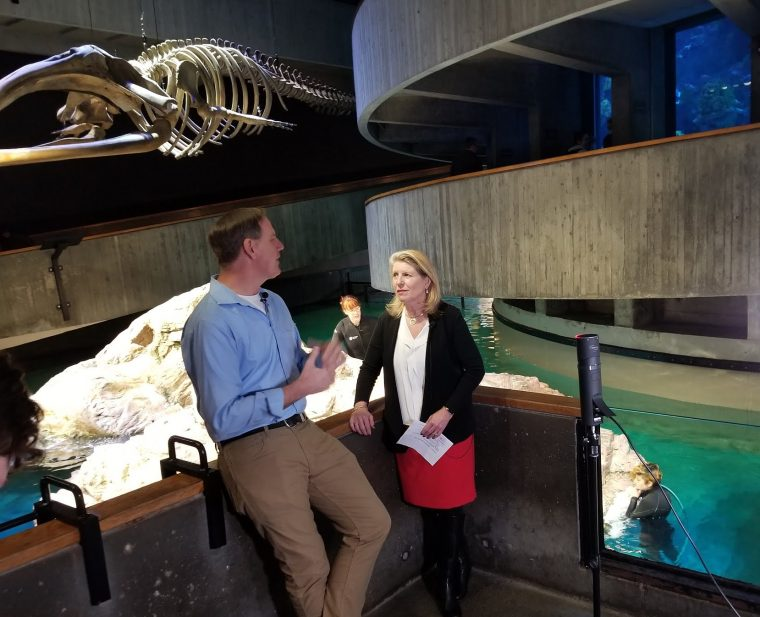 Vikki Spruill and Mark Smith talk in front of the penguins at the New England Aquarium.