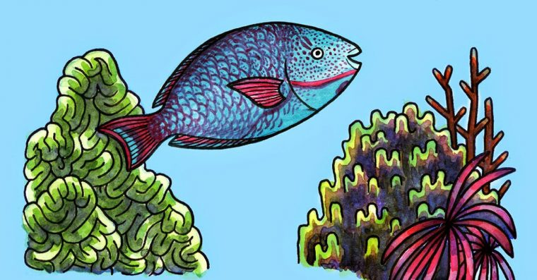 illustration of parrotfish