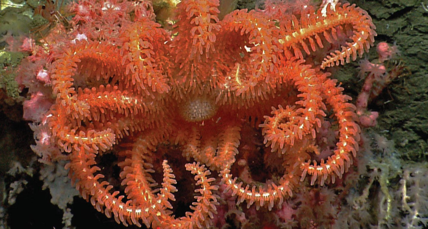 sea star deep in marine national monument