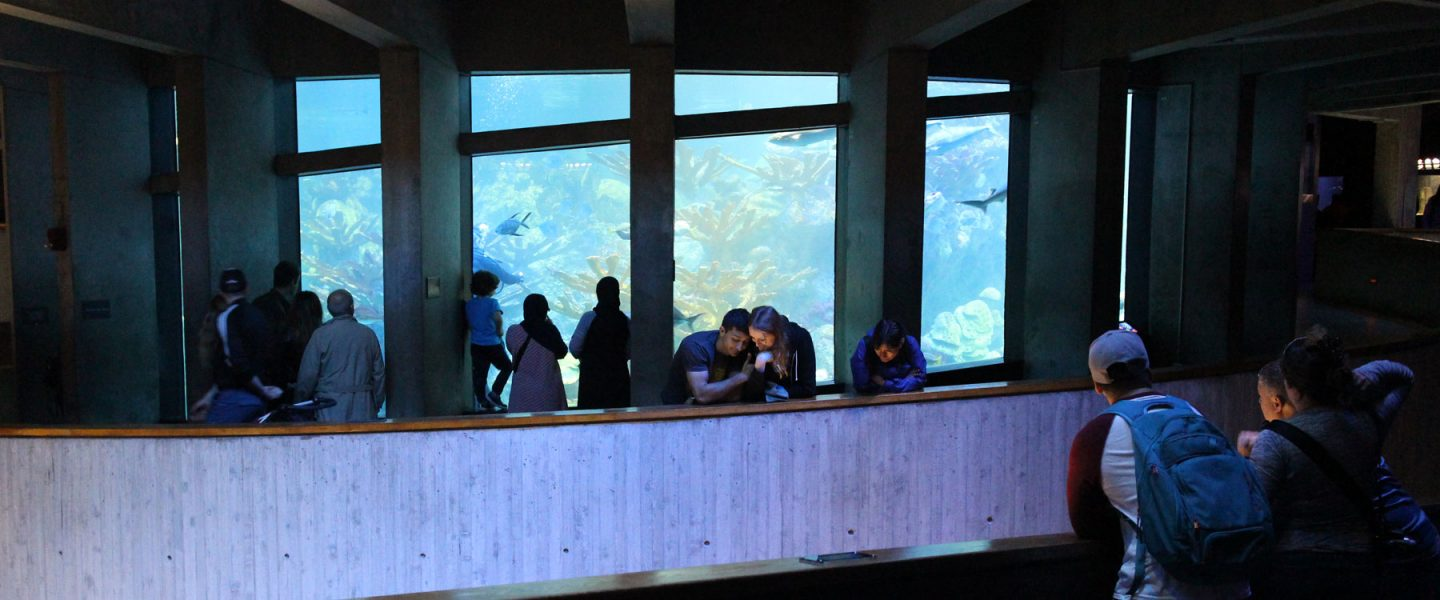 visitors looking at the giant ocean tank
