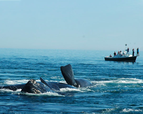 Right Whale Researchers