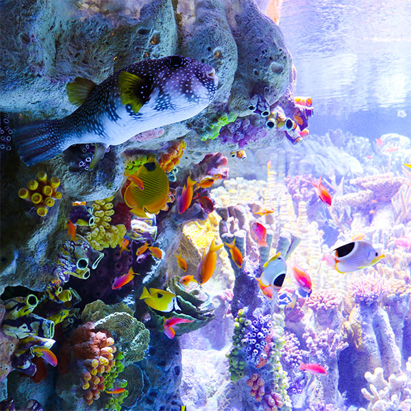 Indo-Pacific Coral Reef Exhibit