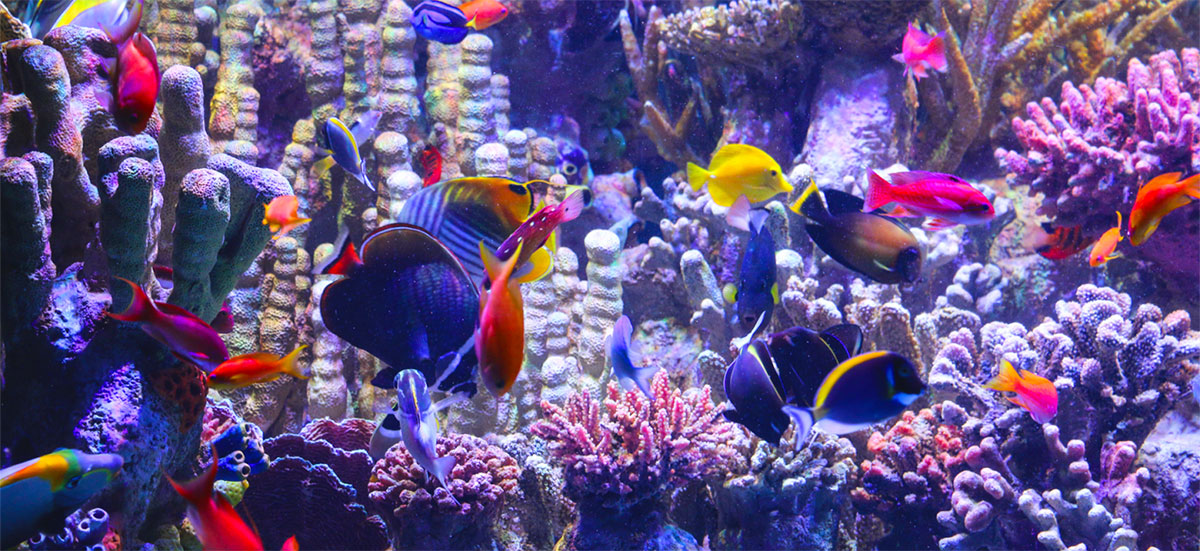 The Indo-Pacific Coral Reef Exhibit at New England Aquarium