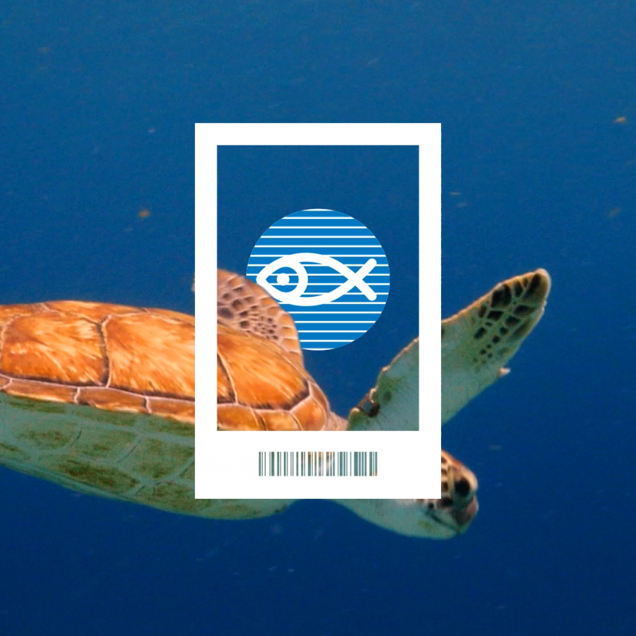 your ticket protects sea turtles
