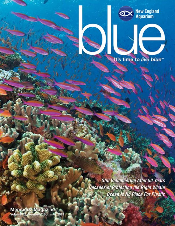 cover of Summer 2019 issue of blue magazine