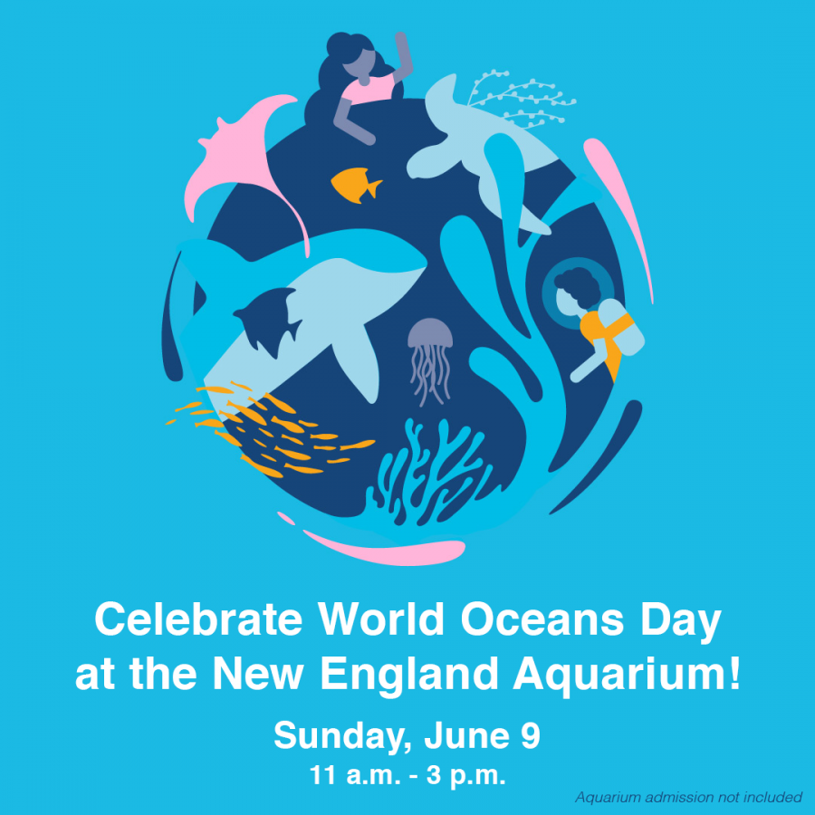 Some Reminders this World Oceans Day - New England Aquarium