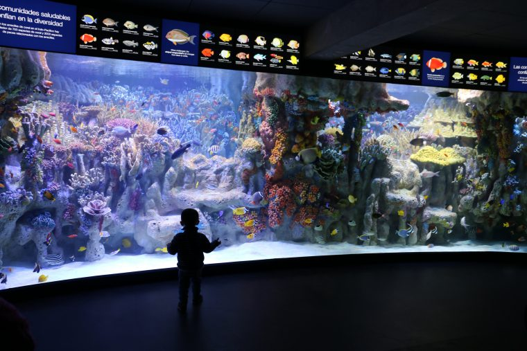 child in front of Indo-Pacific Coral Reef Exhibit