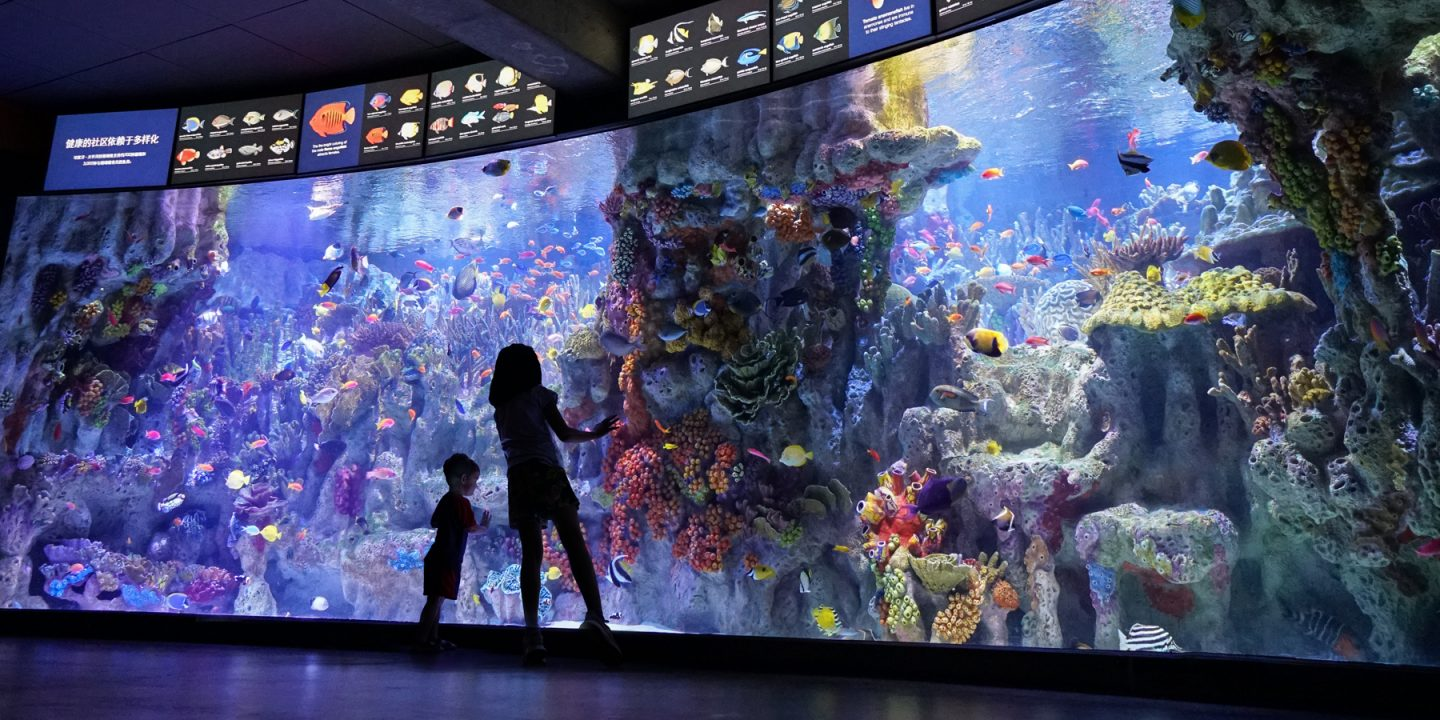 two people in front of the Indo-Pacific coral reef tank