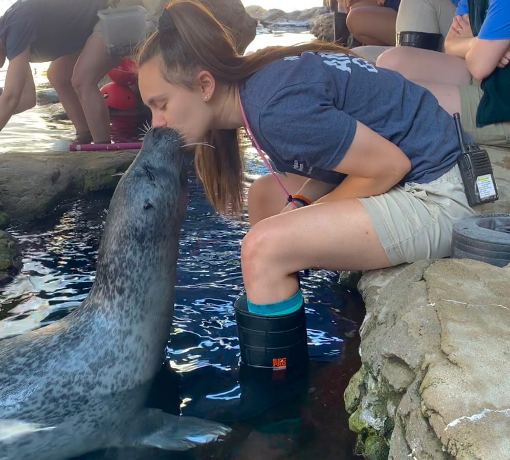 Atlantic harbor seal Reggae kisses a trainer