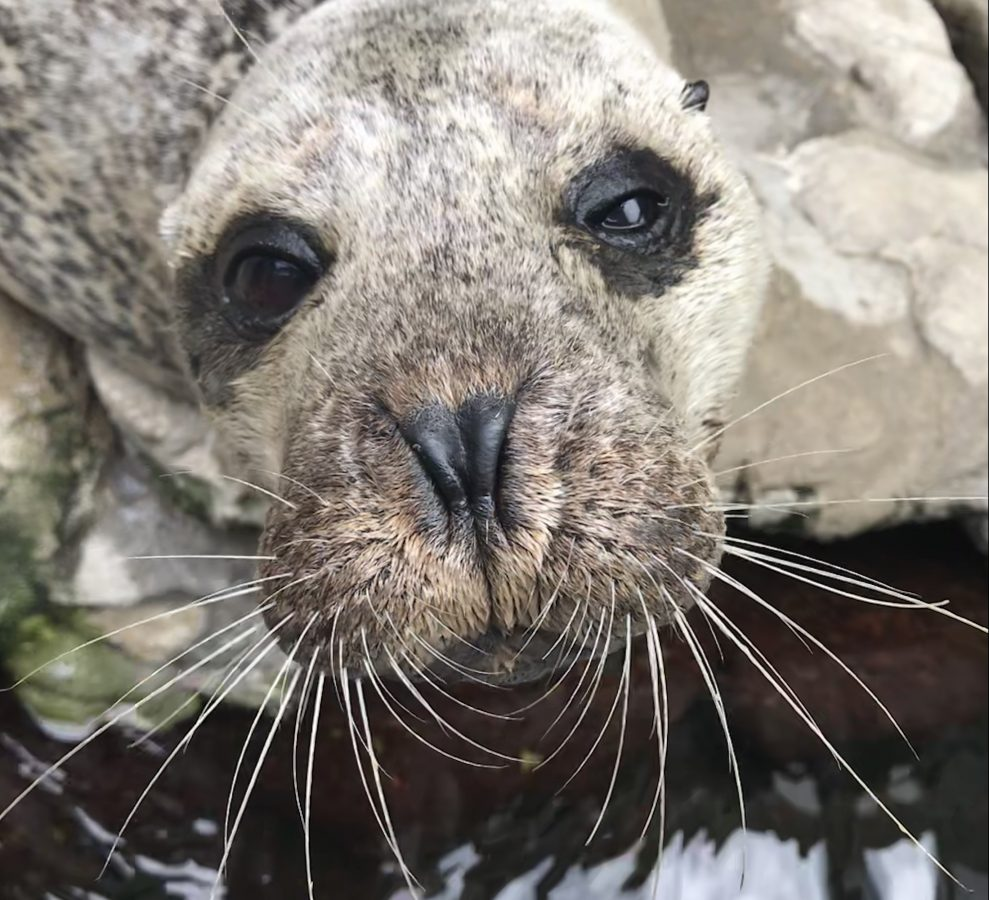 whiskers of a seal