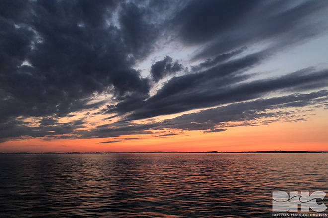 whale watch sunset