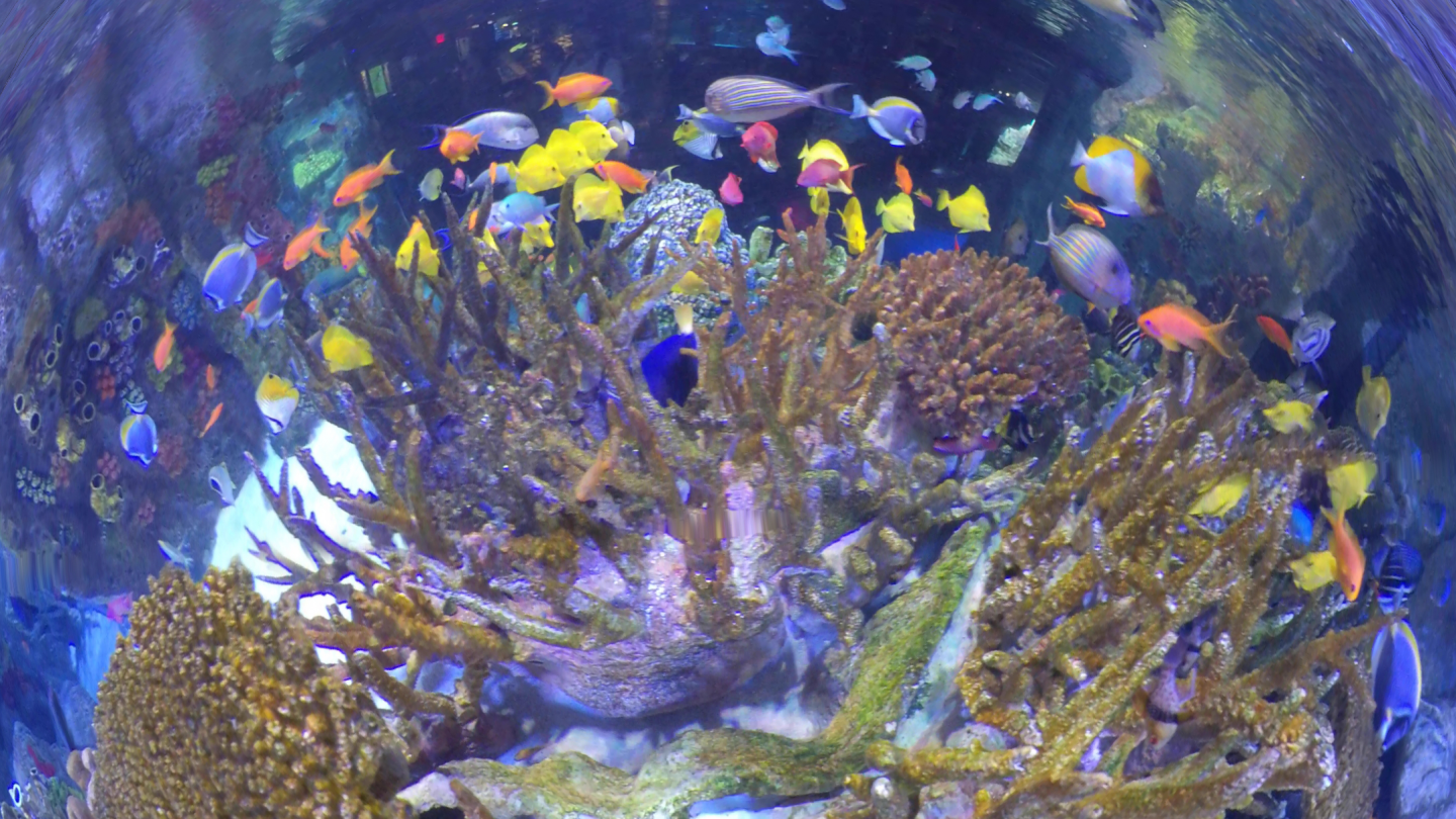 Indo-Pacific Coral Reef