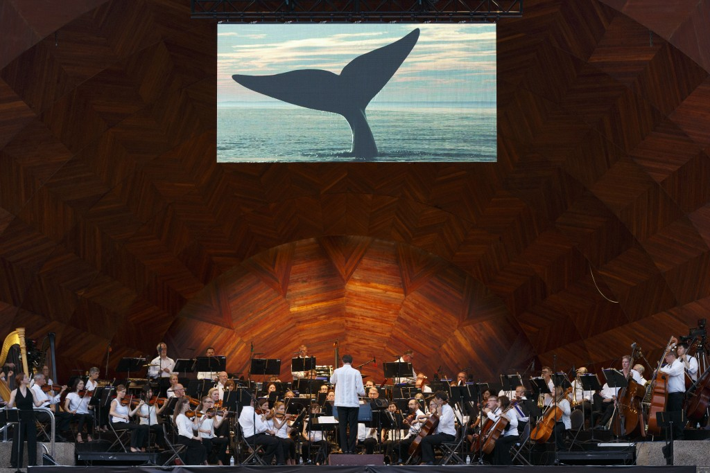 Boston Landmarks Orchestra perform in front of an image of a whale's fluke in August 2018.