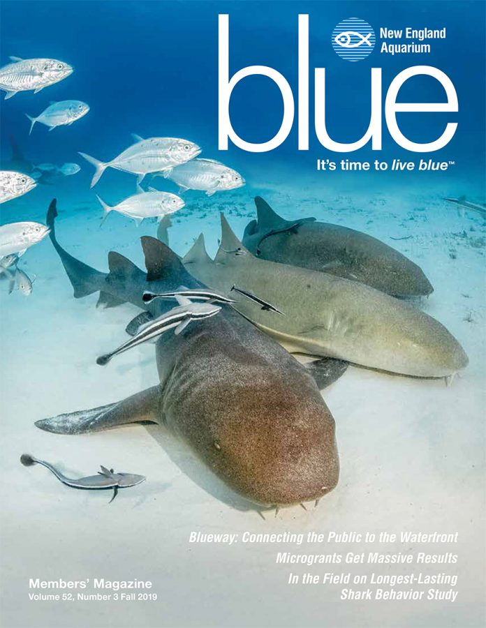 cover of fall 2019 issue of blue magazine featuring sharks
