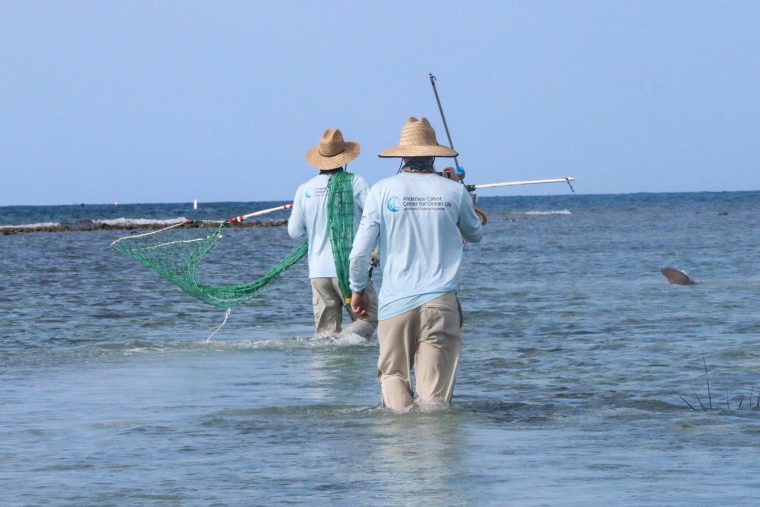 scientists walking with nets