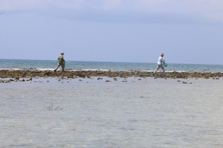 scientists running with big nets