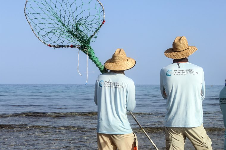 scientists in the field with nets