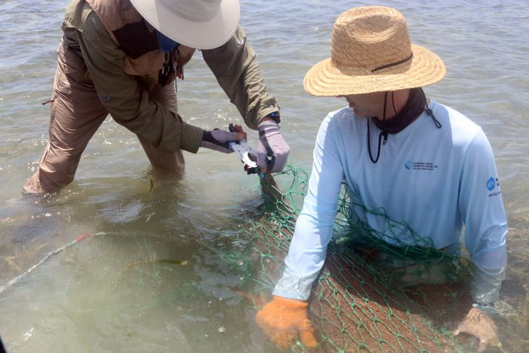 tagging a nurse shark