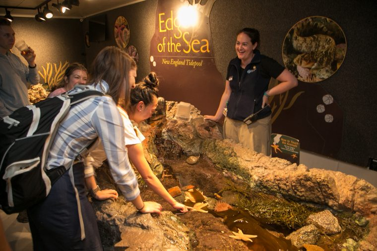 people at the tide pool touch tank