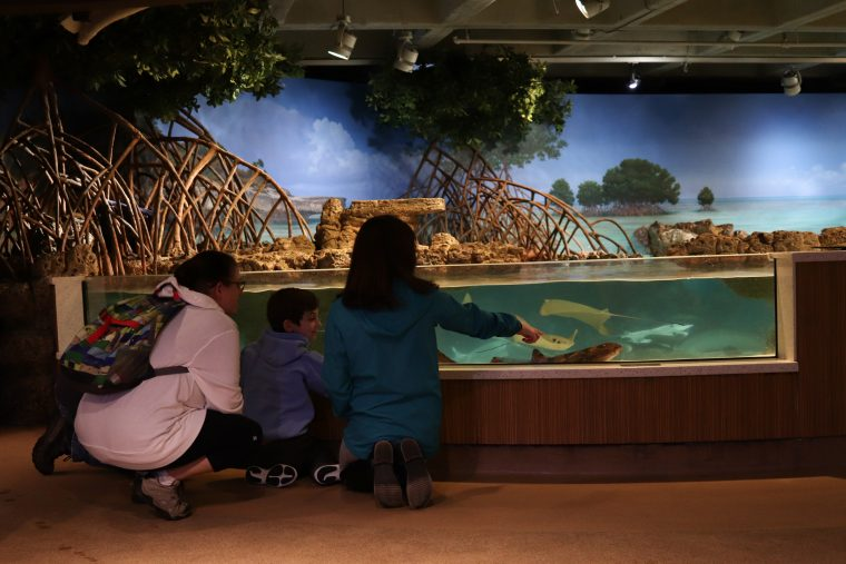 a group of people at the shark and ray touch tank