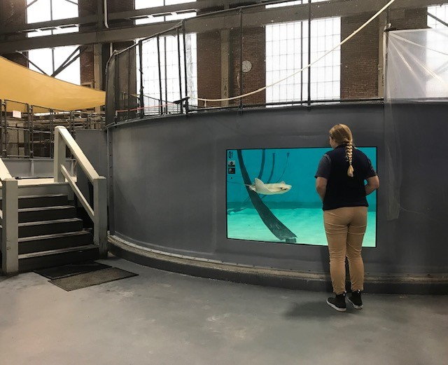 Aquarist Hannah Cutting in front of a ray tank in Quincy.