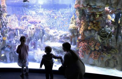 people in front of the Indo-Pacific Coral Reef exhibit