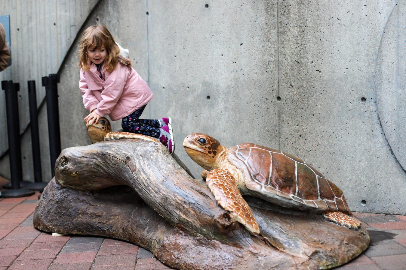 a girl looks back at a turtle sculpture while see climbs on the other sculpture in the Aquarium's plaza