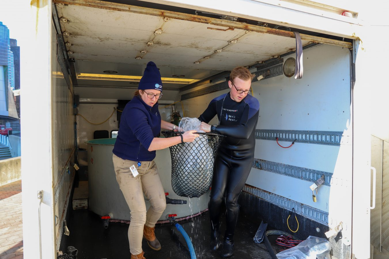Lindsay and Mike quickly transport the fish to the portable tank.
