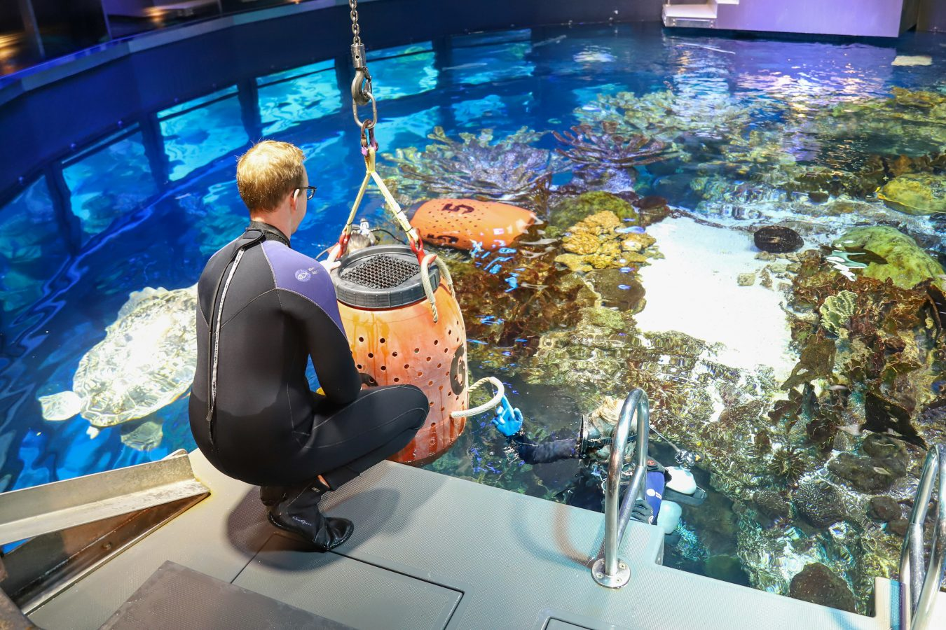 An aquarist adds an animal to the Giant Ocean Tank
