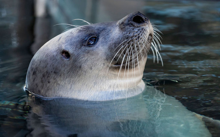 harbor seal lounges in its outside exhibit at the New England Aquarium