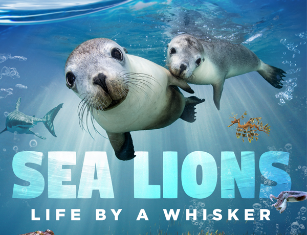 Sea Lions: Life by a Whisker movie ad