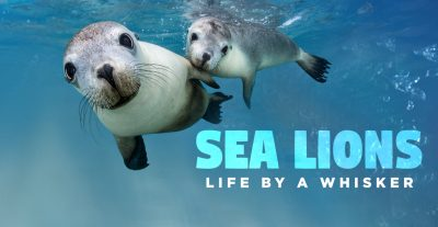 sea lions: life by a whisker movie