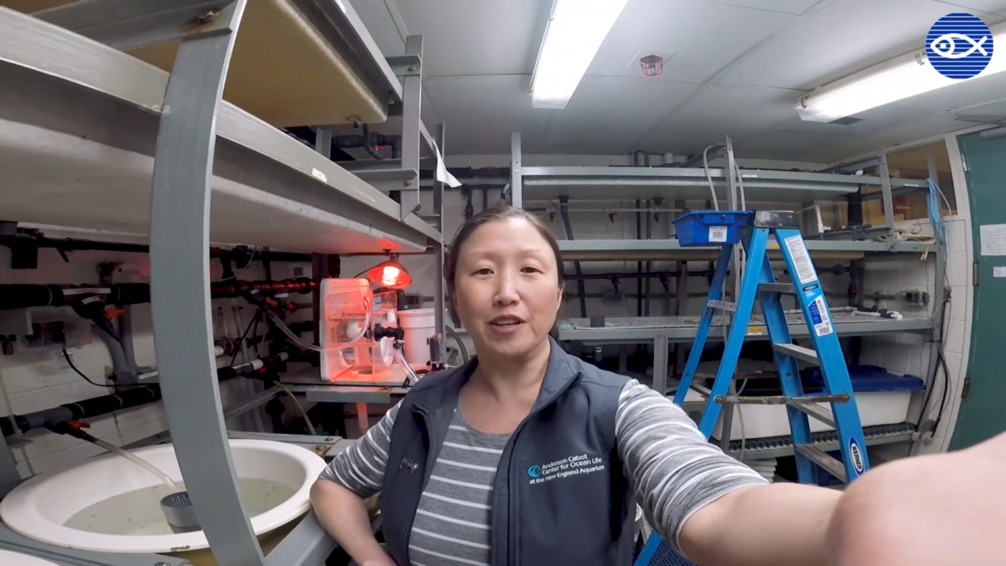 Anita Kim Lobster Lab
