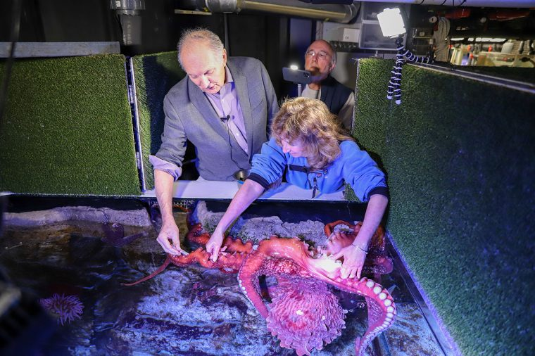 Alan Alda, Sy Montogmery and Octopus