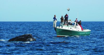 Right Whale Research