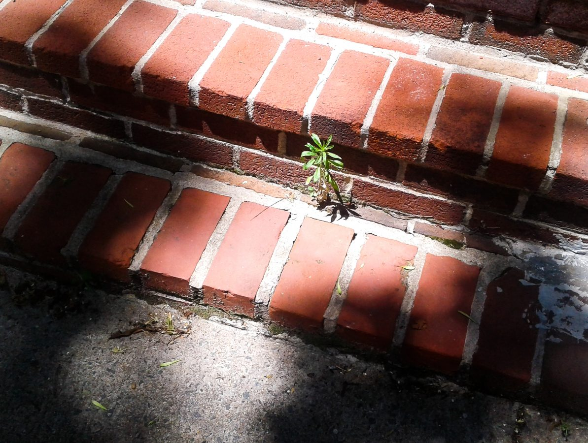 plant growing through brick steps