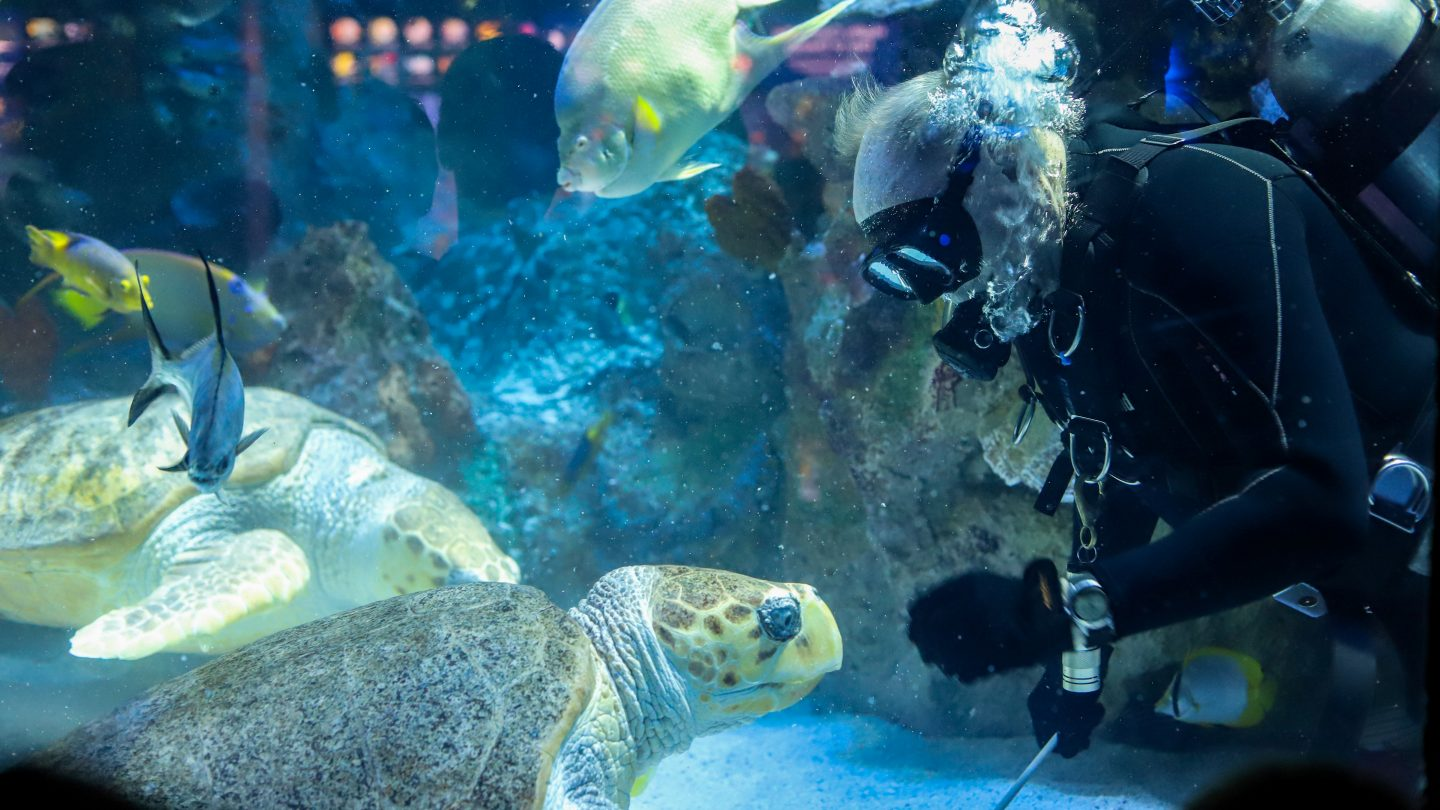 diver underwater with sea turtle