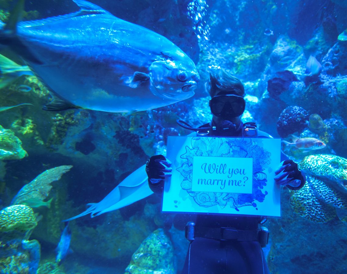 diver in giant ocean tank holding proposal sign