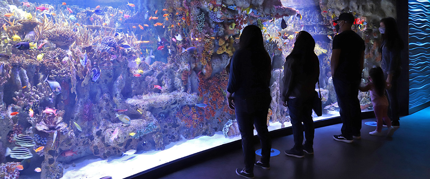 Visitors in front of the Indo-Pacific Coral Reef