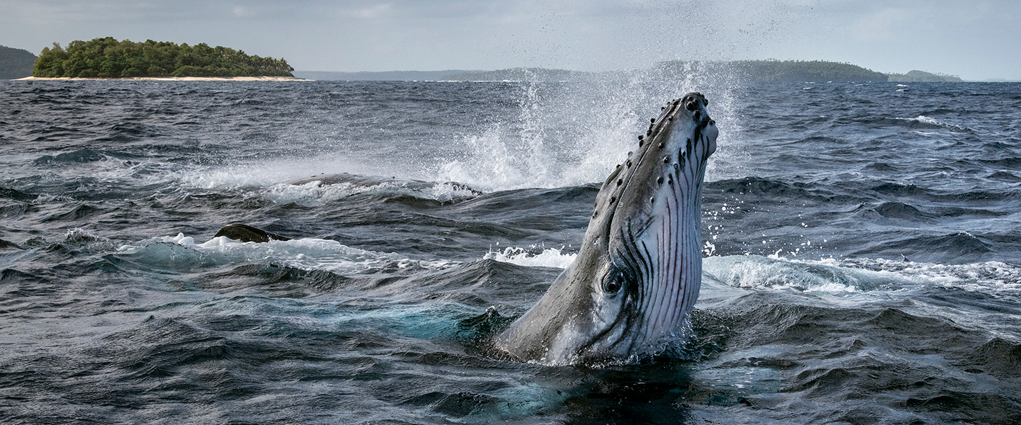 Whale Photo by Brian Skerry