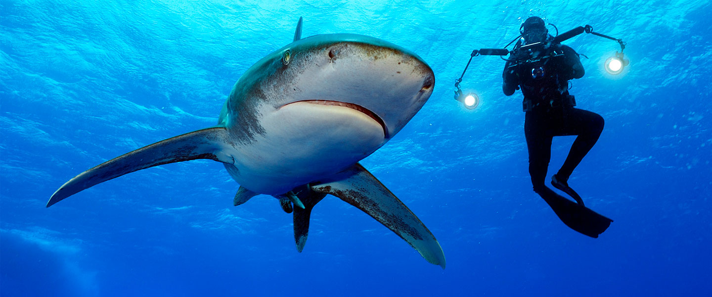 Diver and Shark photo by Brian Skerry